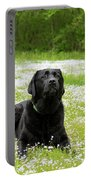 Black Lab Laying In A Field Portable Battery Charger