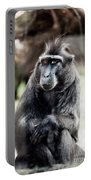 Black Macaque Monkey Sitting Portable Battery Charger