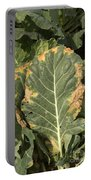 Black Rot On Collards Portable Battery Charger