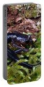 Black Salamander Portable Battery Charger