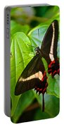 Black Swallowtail Butterfly In Iguazu Falls National Park-brazil  Portable Battery Charger