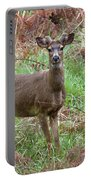 Black-tailed Buck Growing Antlers - Western Oregon Portable Battery Charger