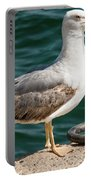 Black Tailed Gull On Dock Portable Battery Charger