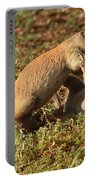 Black-tailed Prairie Dogs Wrestling Around Portable Battery Charger