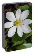 Blood Root Or Blood Wort Portable Battery Charger