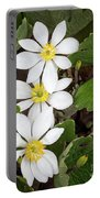 Bloodroot Trio Portable Battery Charger