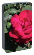 Blooming Rose With New Rose In Garden Portable Battery Charger