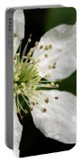 Blossom Portable Battery Charger