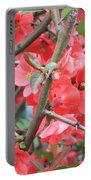 Blossoms Branches And Thorns Portable Battery Charger