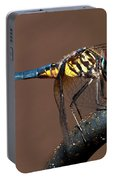 Blue And Gold Dragonfly Portable Battery Charger