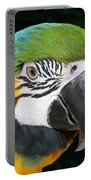 Blue And Gold Macaw Freehand Painting Square Format Portable Battery Charger