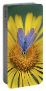 Blue Butterfly On Alpine Sunflower Portable Battery Charger