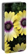Blue Eyed Beauty African Daisy Portable Battery Charger