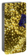 Blue Fish In Coral Portable Battery Charger