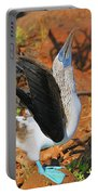 Blue-footed Boobie Display Portable Battery Charger