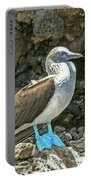Blue Footed Boobie Portable Battery Charger