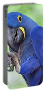 Blue Hyacinth Macaw Portable Battery Charger
