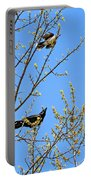 Blue Jay Mobbing A Crow Portable Battery Charger