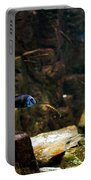 Blue Little Fish In Aquarium Portable Battery Charger