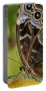 Blue Morpho Butterfly Morpho Peleides  Portable Battery Charger