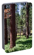 Bluff Lake Ca Fern Forest 2 Portable Battery Charger