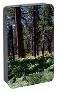 Bluff Lake Ca Fern Forest 4 Portable Battery Charger