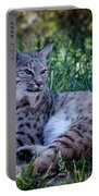 Bobcat In The Grass Portable Battery Charger