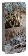 Bobcat Resting Portable Battery Charger