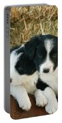 Border Collie Puppies Portable Battery Charger