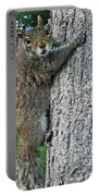 Boston Common Squirrel Hanging From A Tree Boston Ma Portable Battery Charger