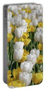 Breathtaking Field Of Blooming Yellow And White Tulips Portable Battery Charger