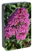 Brilliant Hot Pink Flowering Phlox Flowers In A Garden Portable Battery Charger