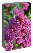 Brilliant Pink Blooming Phlox Flowers In A Garden Portable Battery Charger