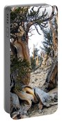Bristlecone Forest, Ca November 2105 Portable Battery Charger
