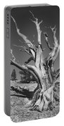 Bristlecone Pine 1 Portable Battery Charger
