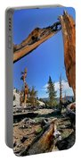 Bristlecone Pine Forest Portable Battery Charger