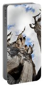 Bristlecone Pine Great Basin Portable Battery Charger
