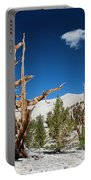 Bristlecone Pine - Pinus Longaeva Portable Battery Charger
