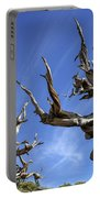 Bristlecone Trees Portable Battery Charger