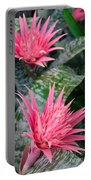 Bromeliad Plant 3 Portable Battery Charger