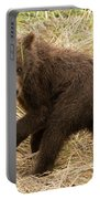 Brown Bear Cub Turns To Look Back Portable Battery Charger