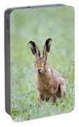 Brown Hare Portable Battery Charger