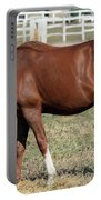 Brown Horse Eat Ranch Scene Portable Battery Charger