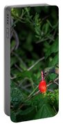 Buff-bellied Hummingbird Feeding At Turks Cap Portable Battery Charger