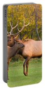 Bull And Cow Elk - Rutting Season Portable Battery Charger