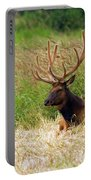 Bull Elk At Rest Portable Battery Charger