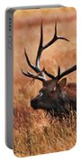 Bull Elk In A Field Portable Battery Charger