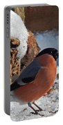 Bullfinch In The Snow Portable Battery Charger