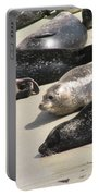 Bunch Of Harbor Seals Resting On A Beach Portable Battery Charger