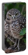 Burrowing Owl Color Version Portable Battery Charger